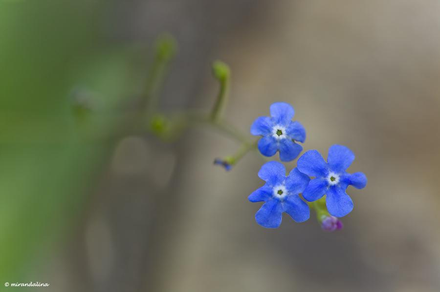 botanic_garden_sad_kopengagen_29.jpg