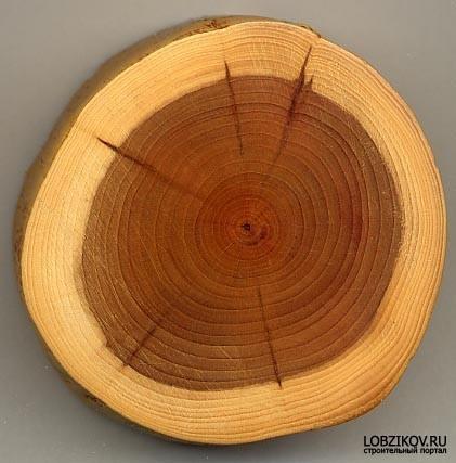 Слово про дерево