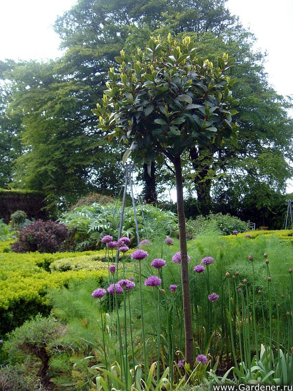 sad_irlandii_bally_maloe_cookery__school_gardens_11.jpg