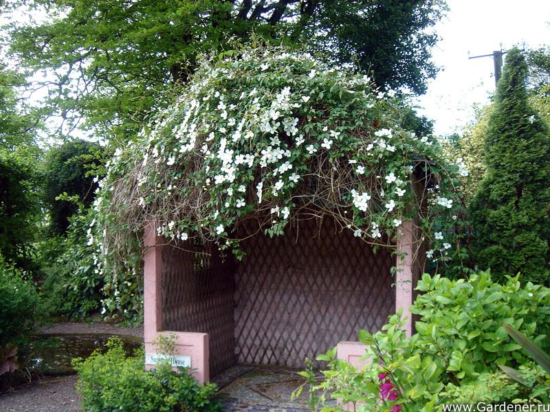 sad_irlandii_bally_maloe_cookery__school_gardens_3.jpg