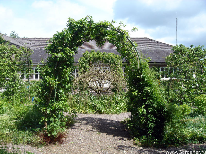 sad_irlandii_bally_maloe_cookery__school_gardens_4.jpg