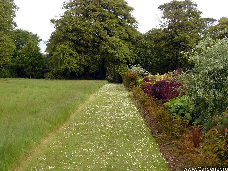 sad_irlandii_bally_maloe_cookery__school_gardens_6.jpg
