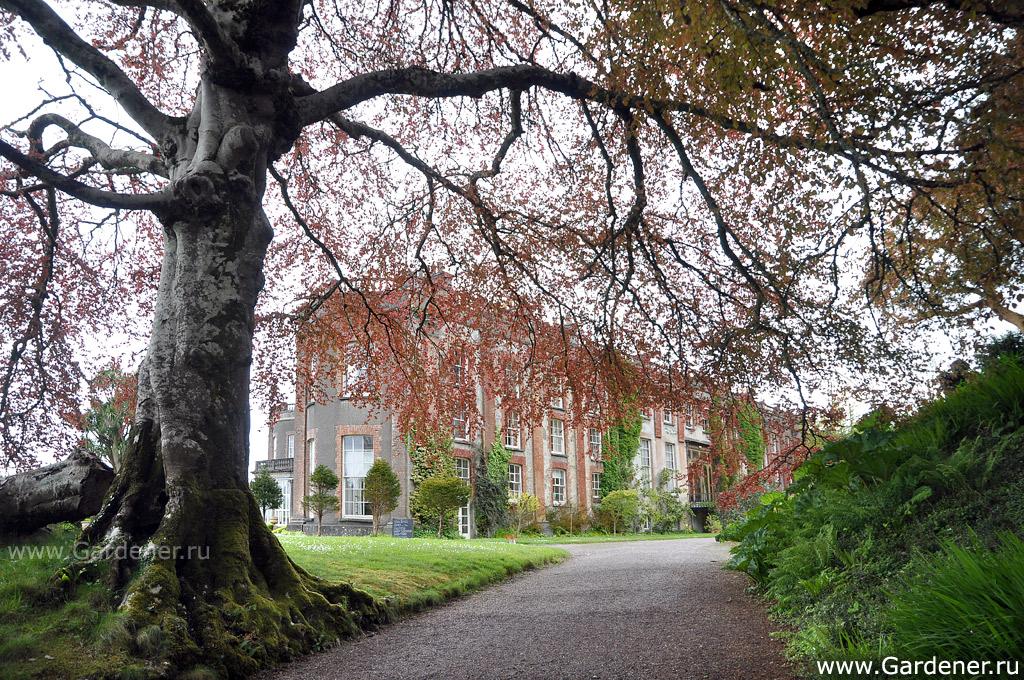 sad_irlandii-bantry_house__and_garden_2.jpg