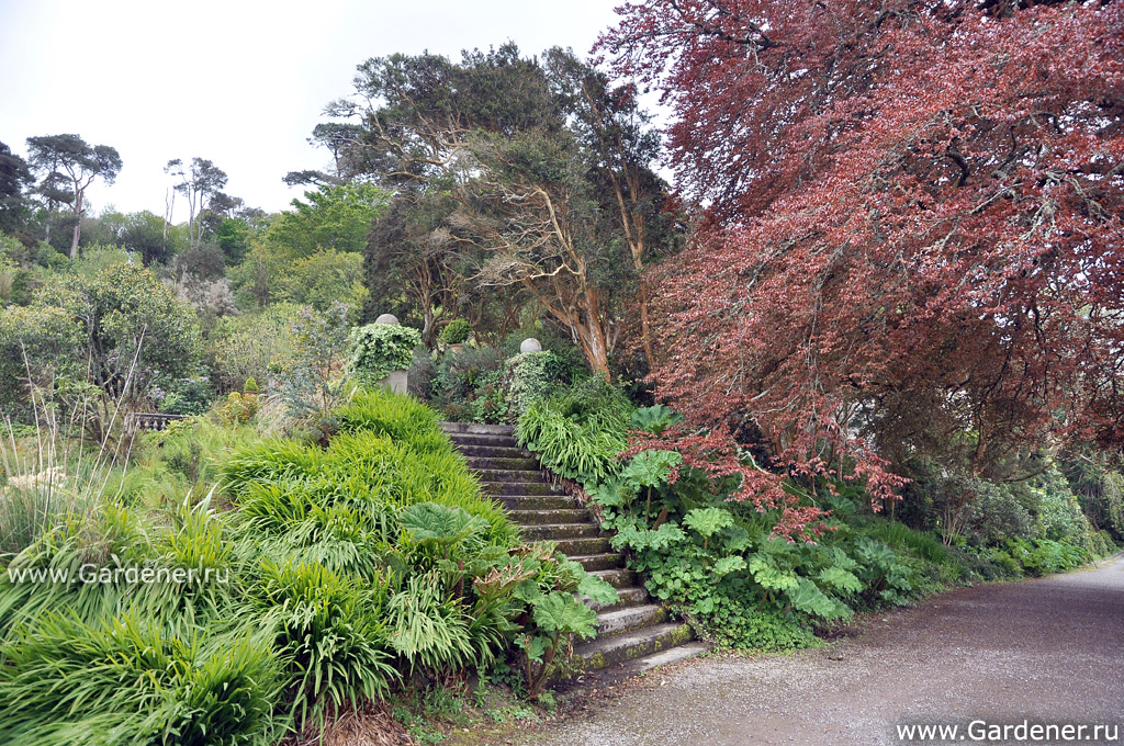 sad_irlandii-bantry_house__and_garden_28.jpg