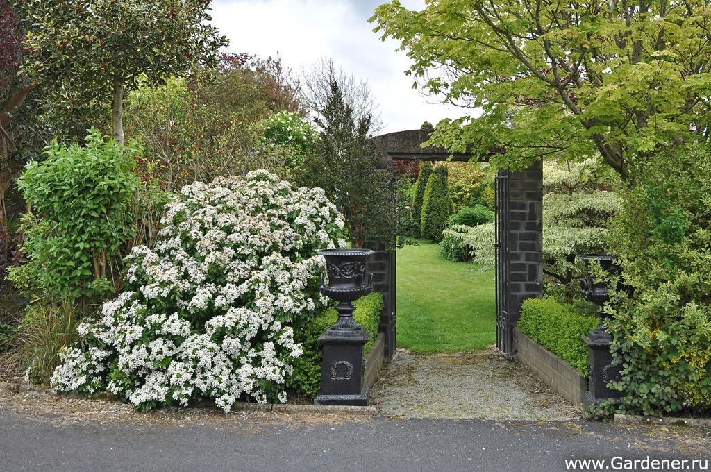 sad_irlandii_boyces_gardens_3.jpg