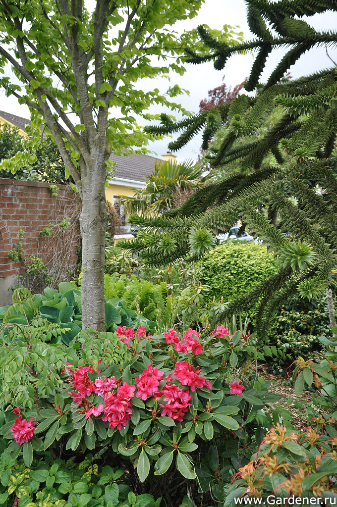 sad_irlandii_boyces_gardens_40.jpg
