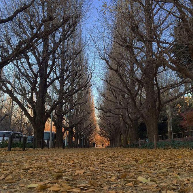 tokio_yaponiya.jpg