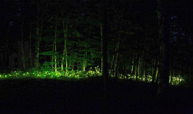 foresta_lumina_taemniche_svitlove_shoy_v_kvebekskomy_parky_vid_monrealskoi_media_stydii_4.jpg