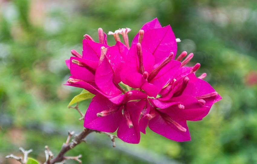 botanicheskii_sad_santo_domingo_10.jpg