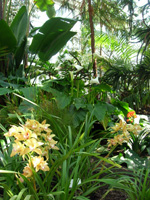 nacionalnii_botanicheskii_sad_7.jpg