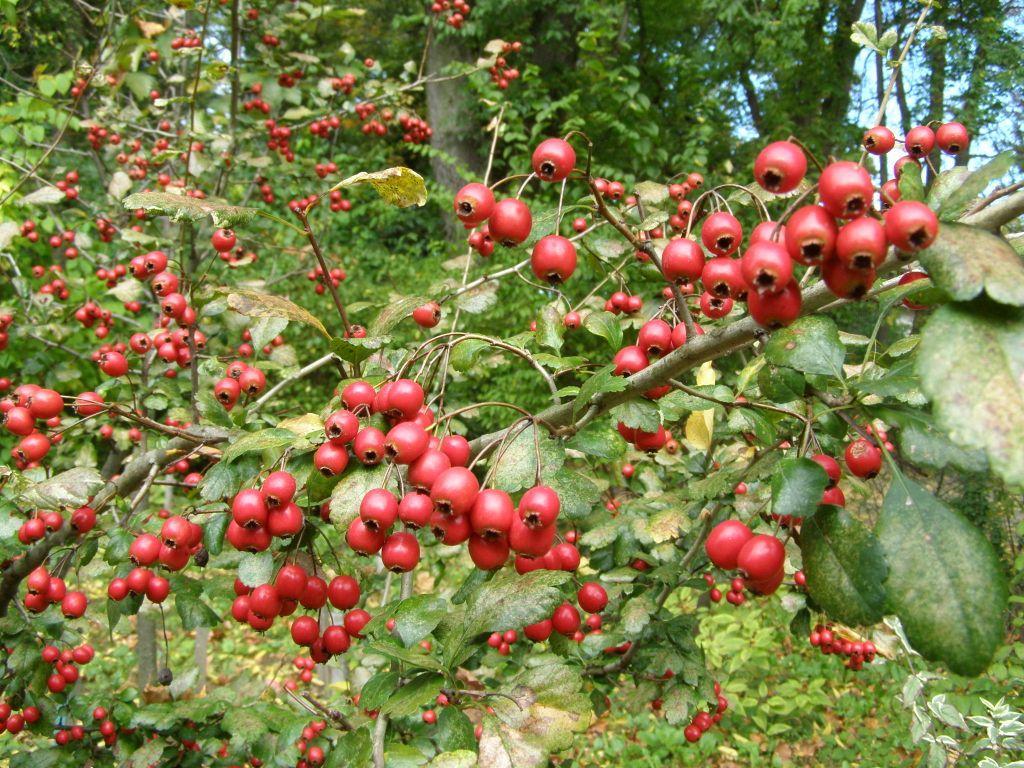 botanicheskii_sad_v_vacratote_vengriya_9.jpg