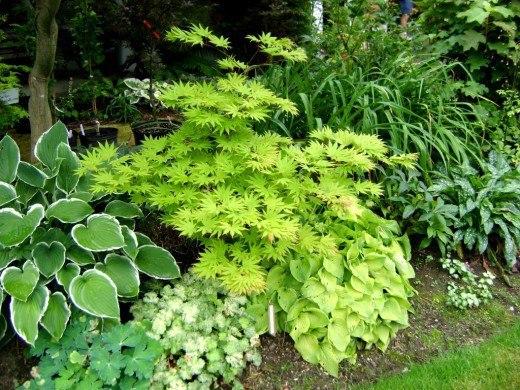 Декоративні особливості рослин і прийоми складання рослинних композицій