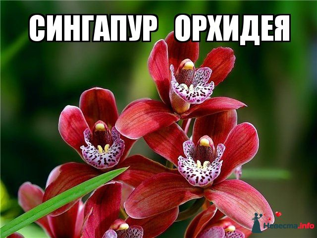 cveti_nacioanalnie_simvoli_stran_12.jpg