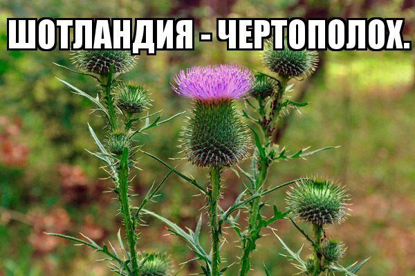 cveti_nacioanalnie_simvoli_stran_14.jpg