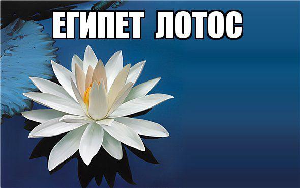 kviti_nacioanalni_simvoli_krain_11.jpg