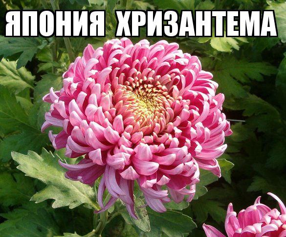 kviti_nacioanalni_simvoli_krain_15.jpg