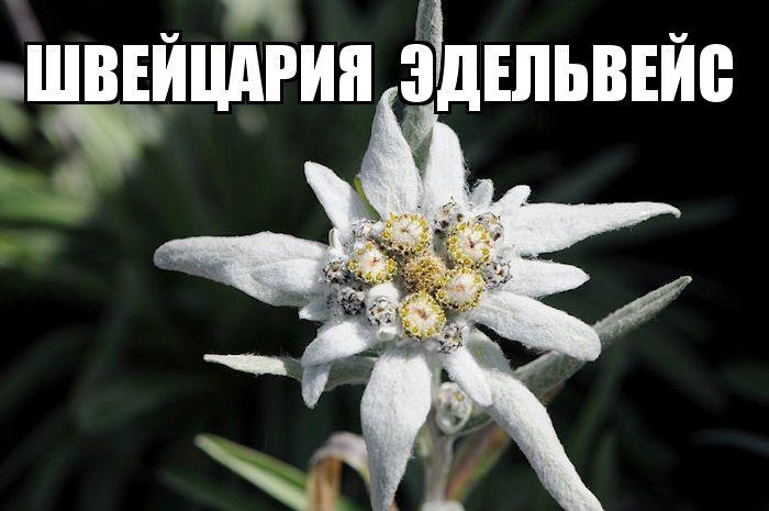 kviti_nacioanalni_simvoli_krain_18.jpg