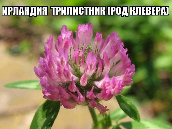 kviti_nacioanalni_simvoli_krain_20.jpg