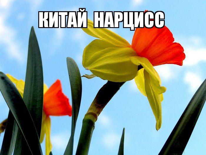 kviti_nacioanalni_simvoli_krain_3.jpg