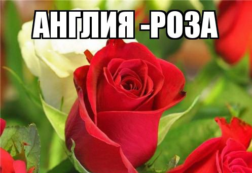 kviti_nacioanalni_simvoli_krain_6.jpg