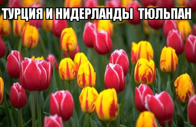 kviti_nacioanalni_simvoli_krain_7.jpg