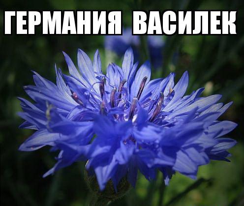 kviti_nacioanalni_simvoli_krain_8.jpg