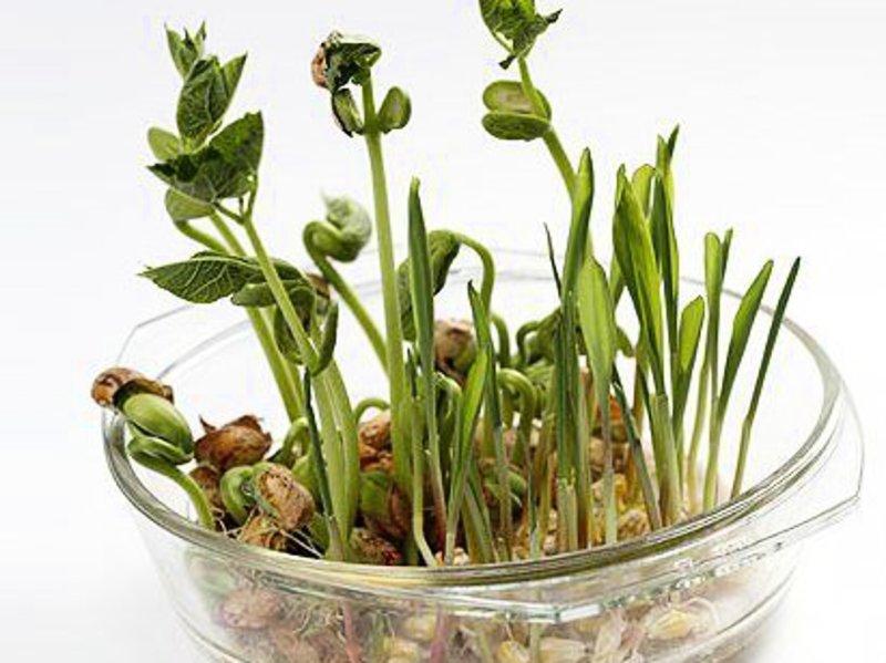 Як розбудити насіння – передпосівна підготовка
