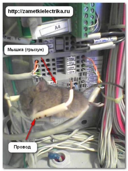 skrytaya_elektroprovodka_v_derevyannom_dome______3-451x600.jpg