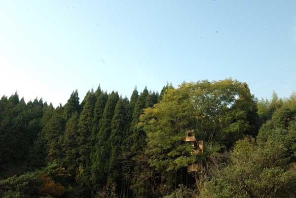 bydinki_na_derevi_takashi_kobayashi_2.jpg