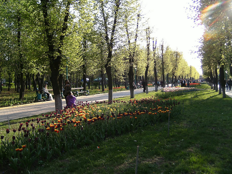 tulpanu_v_kirivograde_3.jpg