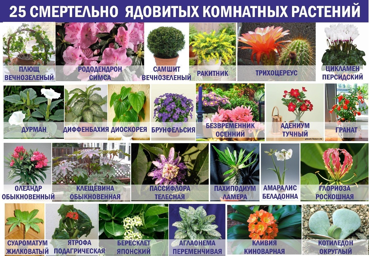 25_smertelno_nebezpechnih_kimnatnih_roslin.jpg