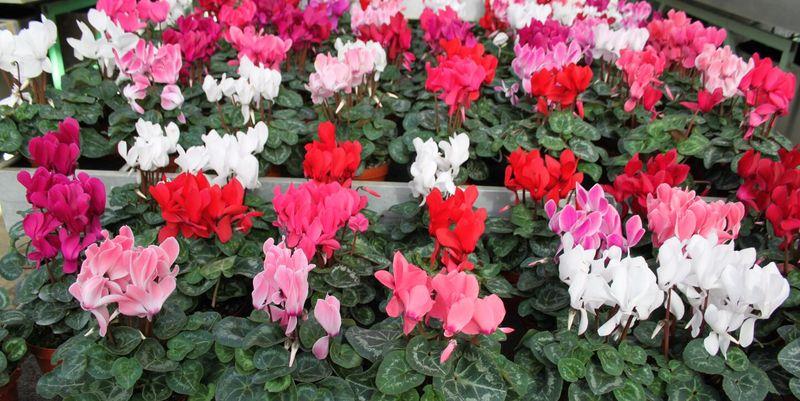 Комнатные цветы и растения от А до Я каталог названий, фото
