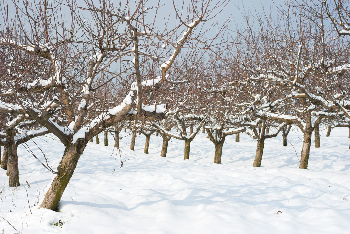 pruning_hero2.jpg