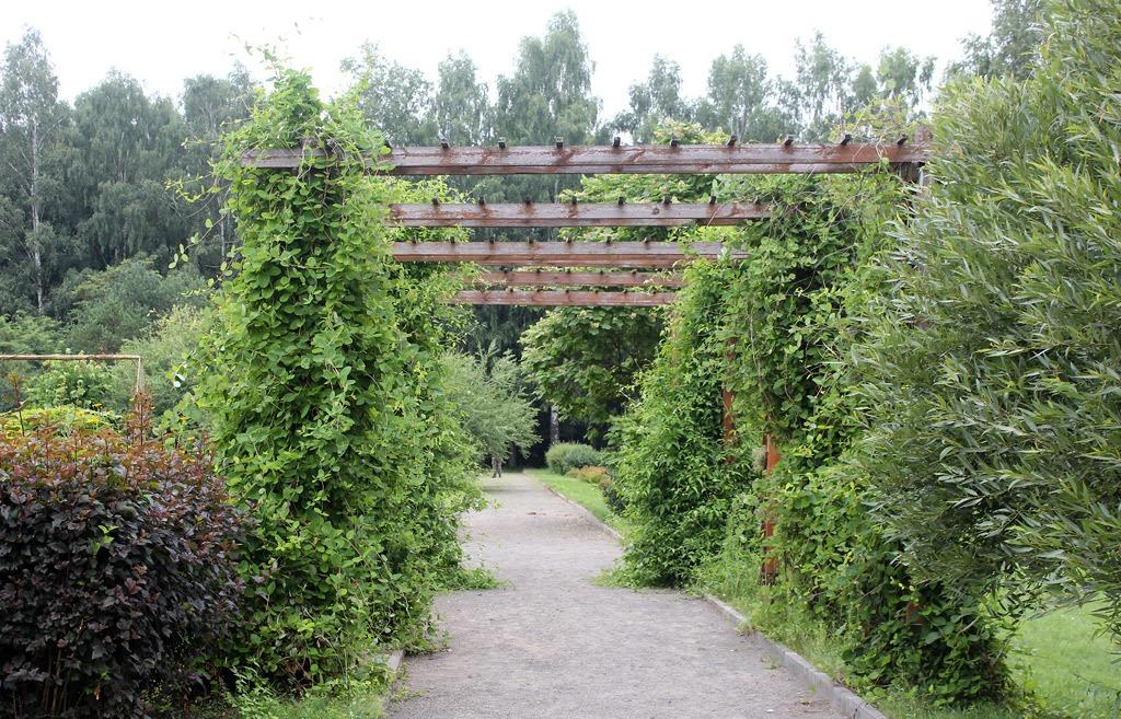 botanicheskij_sad_v_belorusii_12.jpg
