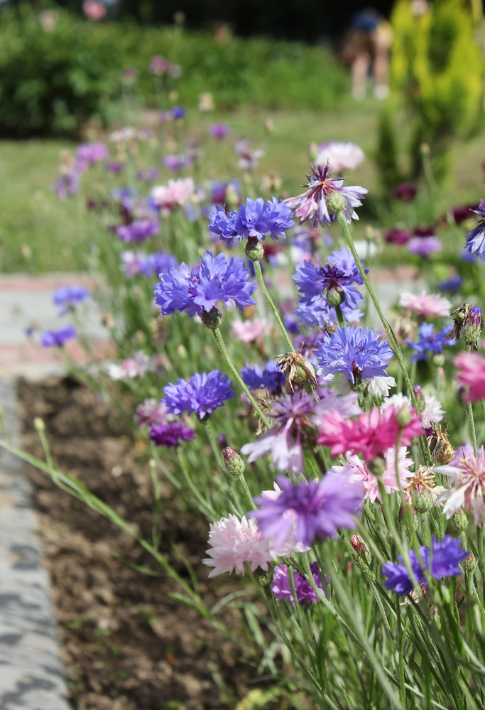 botanicheskij_sad_v_belorusii_15.jpg