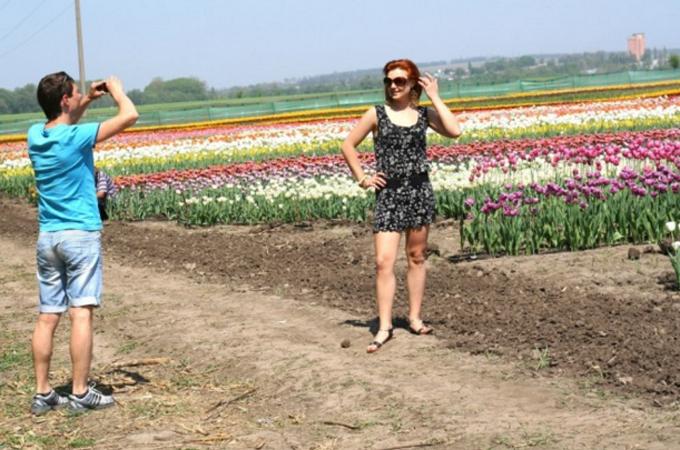 Маленька Голландія на Буковині