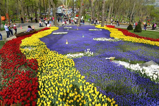 arsenal-tulips-2016_1.jpg
