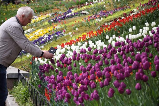 Виставка тюльпанів у Києві: відгуки, фото, відео