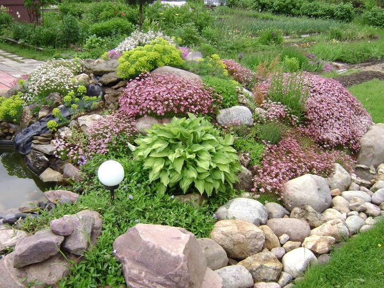 Растения для альпийской горки - тонкости выбора