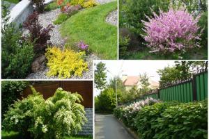 Ароматичні рослини для садового дизайну