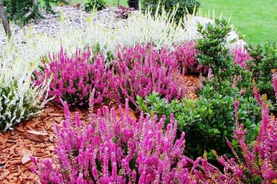 Красивоквітучі чагарники для вашого саду