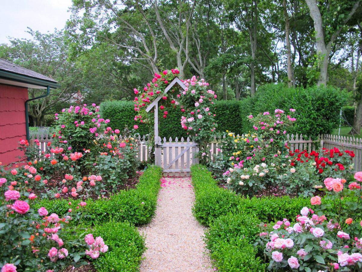 Как сделать цветник из роз