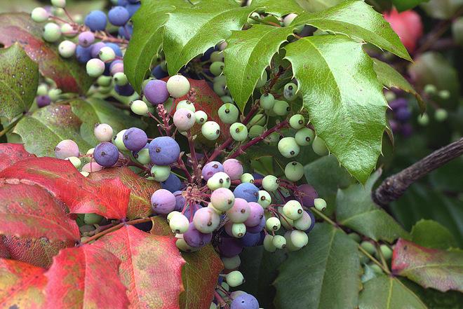 Чим замінити екзотичні рослини, які не ростуть у нас - ч.1