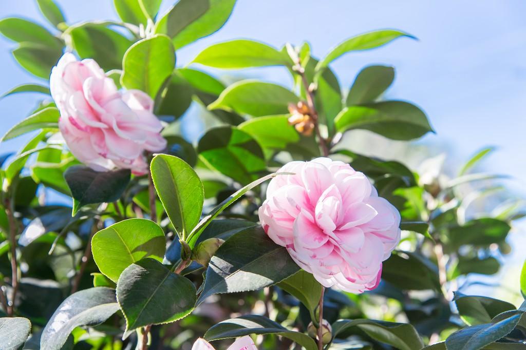 Чим замінити екзотичні рослини, які у нас не ростуть - ч.2