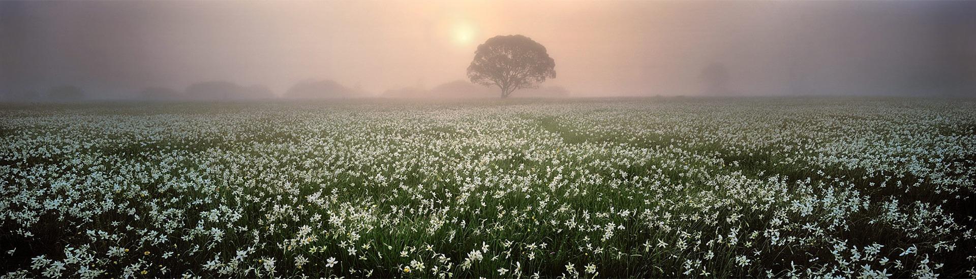 Мандрівка у країну квітів навесні