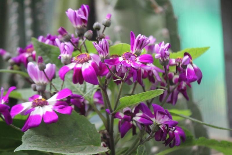 cvetyshee_zaporoje_v_botanicheskom_sady_rascveli_krokysi_jasmin_i_denejnoe_derevo_1.jpg