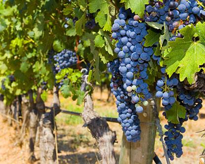 france-wineries.jpg