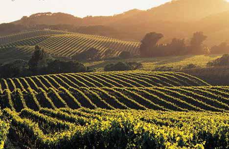 quercy-vineyard.jpg