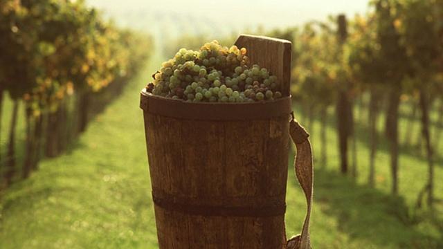grape_bio.jpg