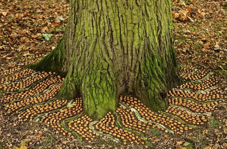 cd67026-james-brunt-natural-materials-land-art-england13-5a7d9591292b7--880.jpg